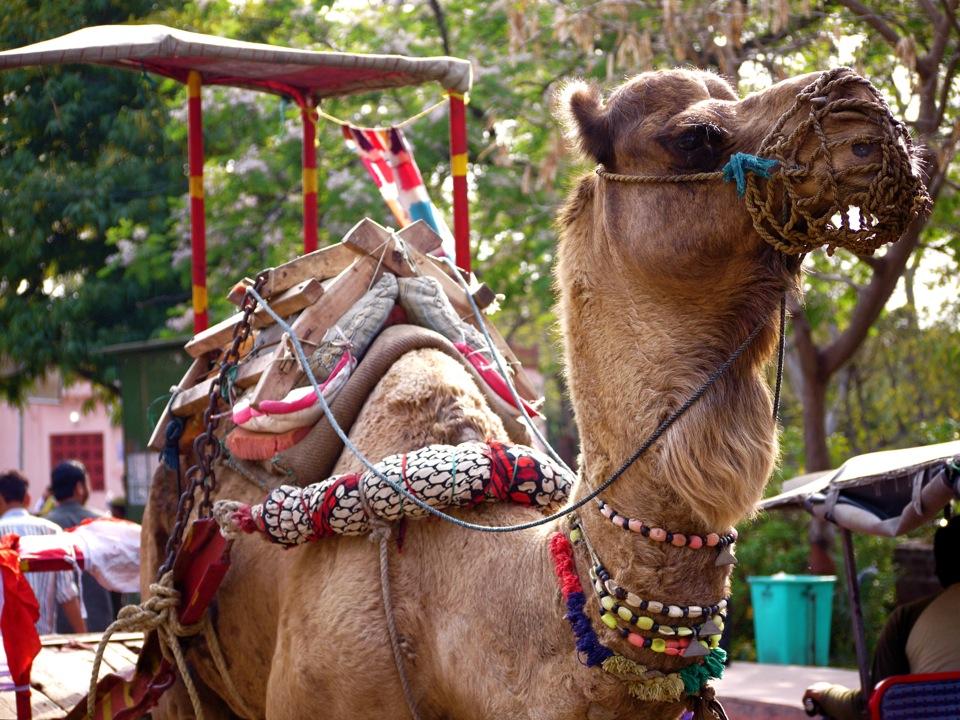 Bejewelled. Agra.
