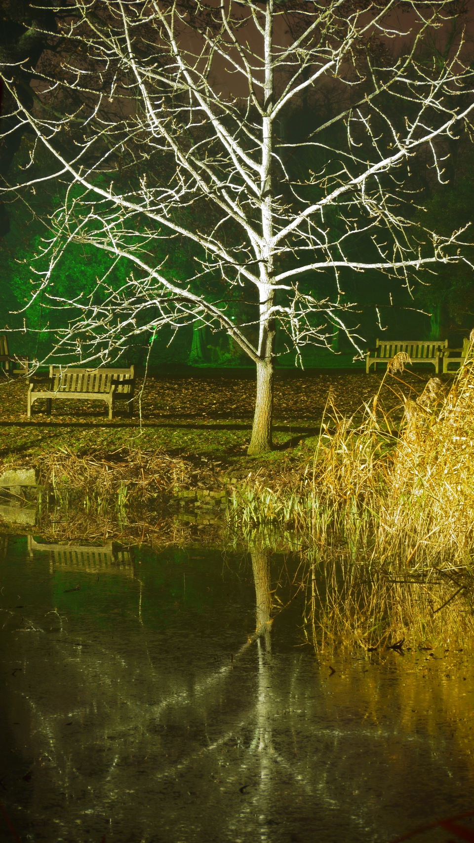 kew_illumination trail_1213_7